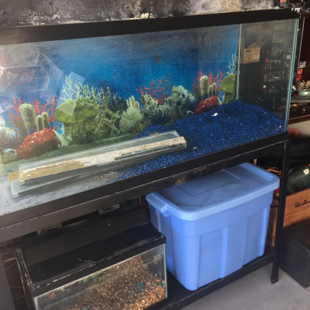 Freshwater aquarium fish orlando - Joe